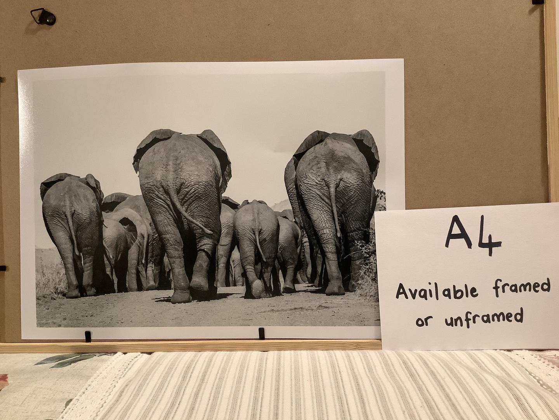 Elephan bums a4