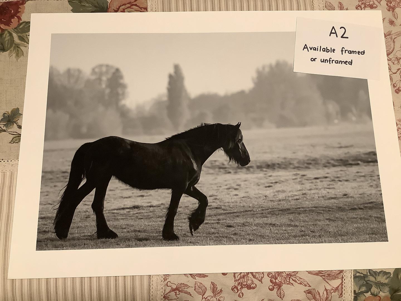Stallion a2