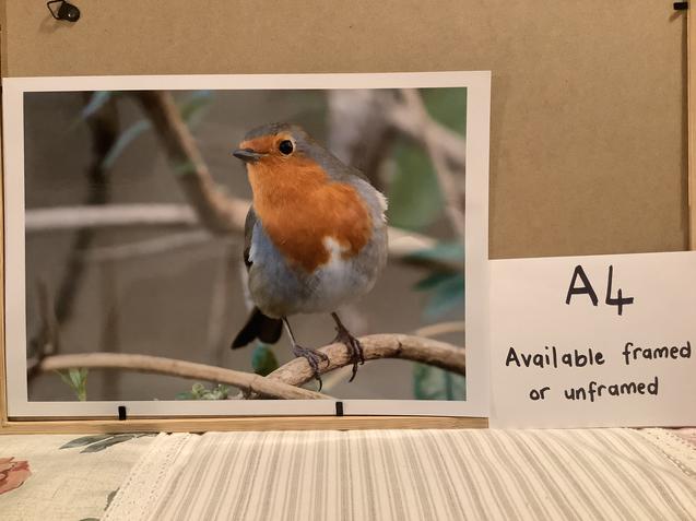 Robin a4