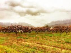 Orem orchards_edited.jpg