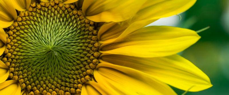 joie fleur atelier.jpg