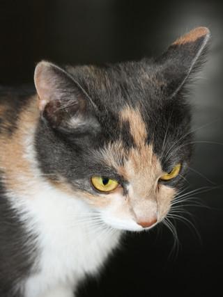 Kattporträtt.jpg
