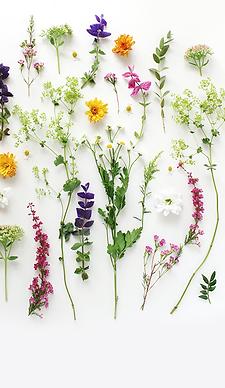botanical page.png