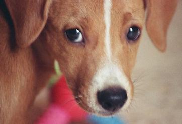 Puppy with Sad Eyes