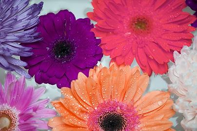 african-daisy-3829681_1920.jpg