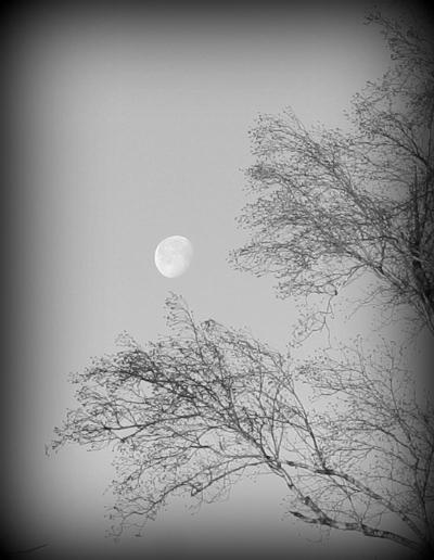 copyright Phaedra Zoe
