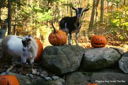 Happy Halloween Briar