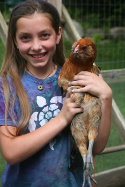Chicken Keeper