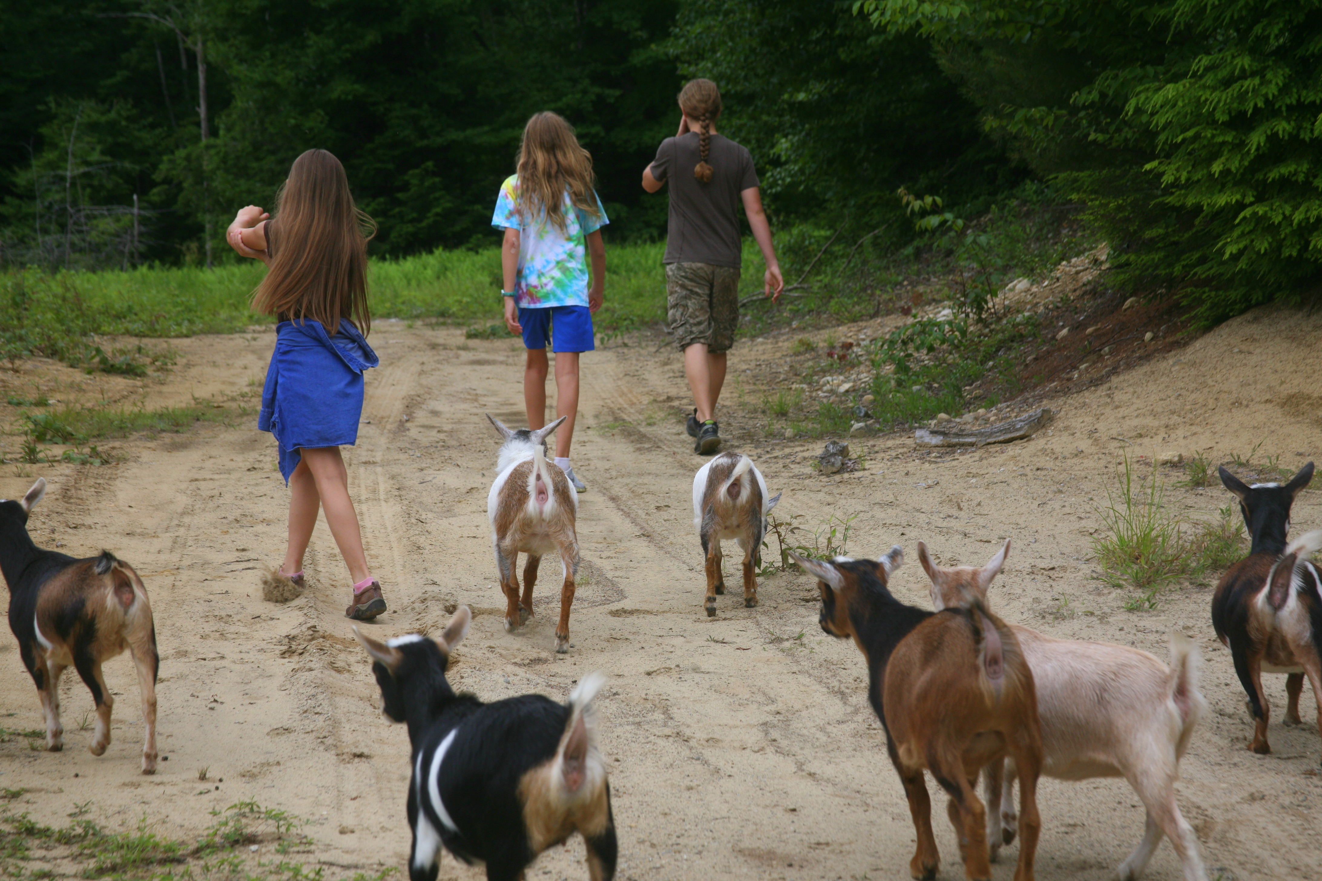 Hiking Goats