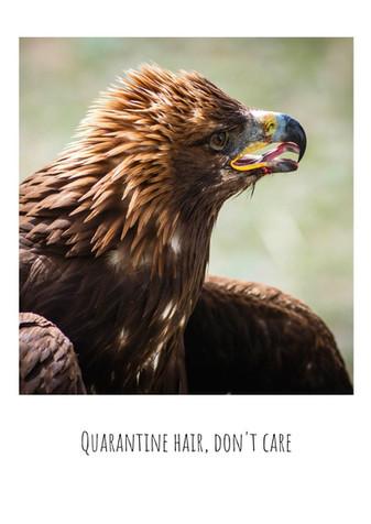 Quarantine hair, don't care