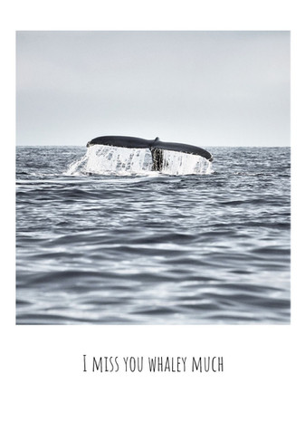 I miss you whaley much