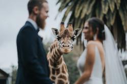 Melbourne zoo wedding photo