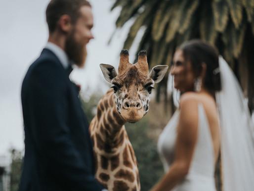 Melbourne Zoo Wedding