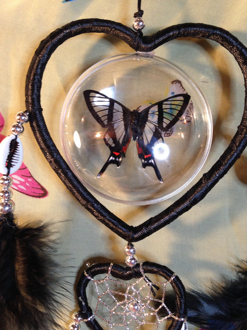 Real Chorinea SylphinaSylphina Angel Butterfly Dreamcatcher New Is Dream Catcher Real