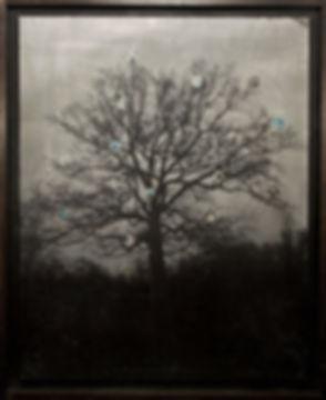 The_Tree_Albin_Biblom.jpg