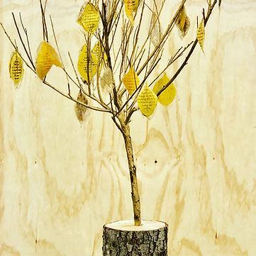 Seminaria Tree.jpeg