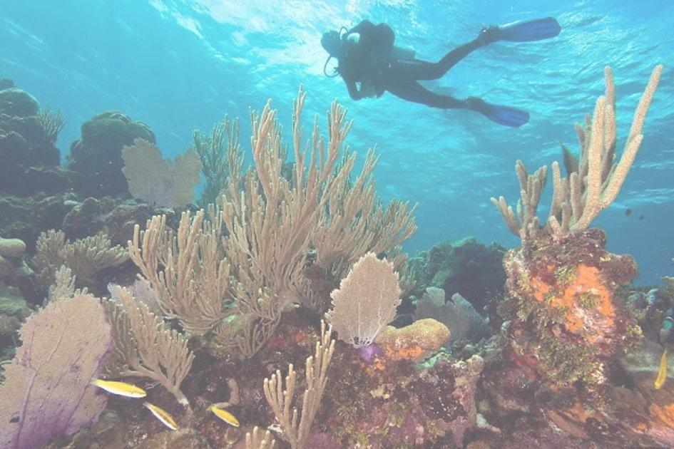 Valet Diving.jpg