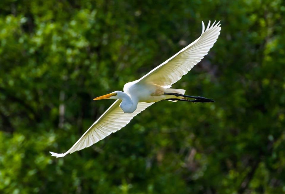 La Crosse Marsh bird.jpg