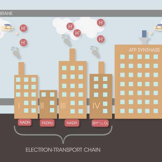 Factory - Electron-Transport Chain