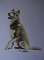 Kai-dog-framed-portrait-husky