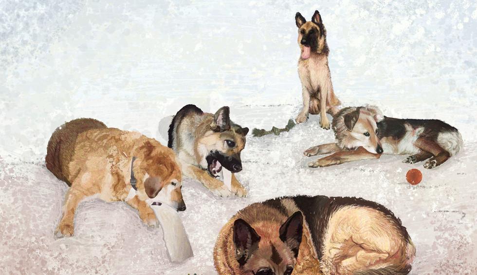 Joyce Hamilton's Dogs