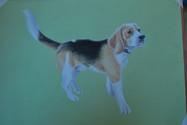 Harley-dog-framed-portrait