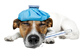 Image2CHIENS MALADE.png