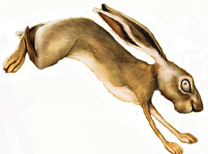hareflipped.png