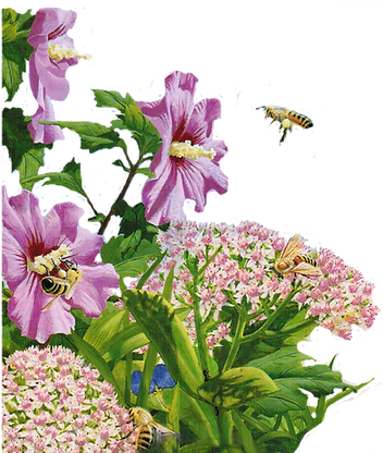Bee and flowers-2.png