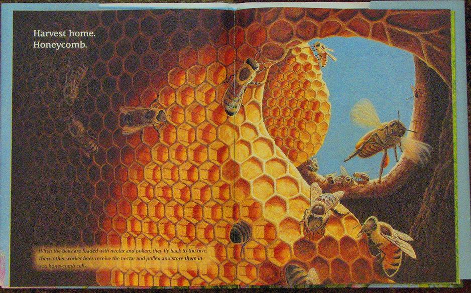 honeybeepage 002.jpg