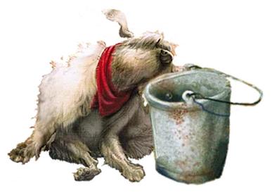 bucketanddog.png