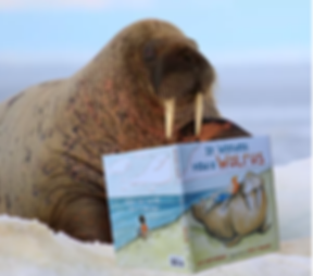 walrus with book.png
