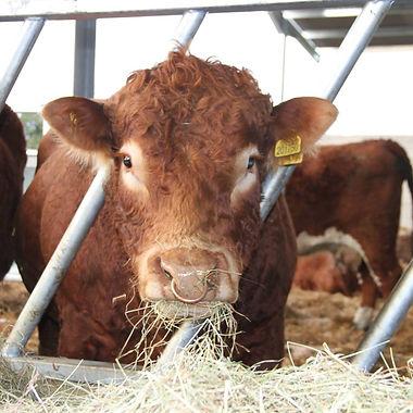 Farm Animal AVLA