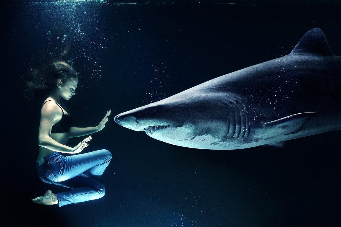 Nuotare con Shark