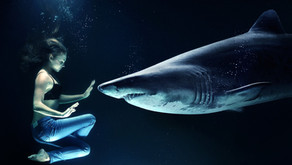 Sharks - take them with a pinch of salt