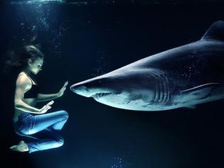 Que tal colocar um tubarão no seu aquário?