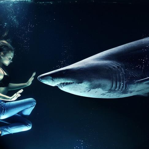 Pon un tiburón en tu vida y mantente fresco...