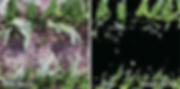 02-IATECPS - SLANTRANGE - SLANTVIEW.png