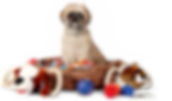 Shih Tzu with Toys