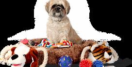 La importancia de elegir bien la cama de tus mascotas