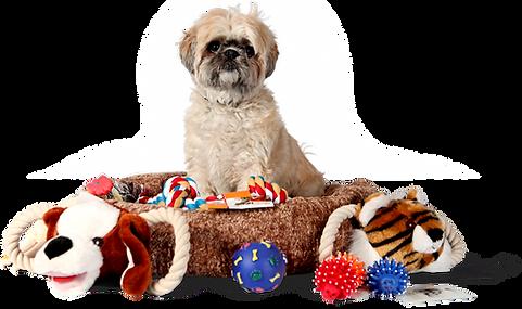 Shih Tzu com brinquedos