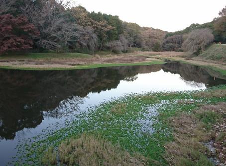 トンボと水鳥の池・暮色