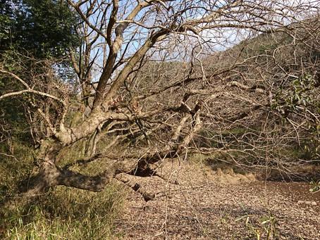 立田自然公園のサン光家政婦紹介所です