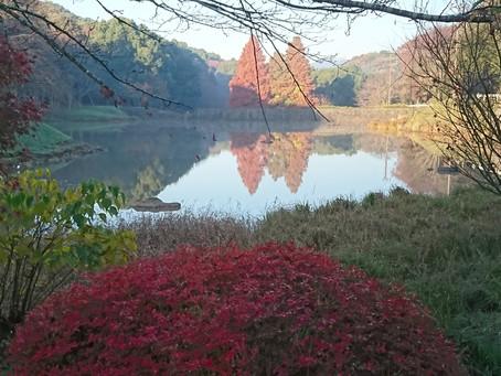 立田自然公園・サクラ池