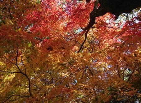 立田自然公園・紅葉が見頃