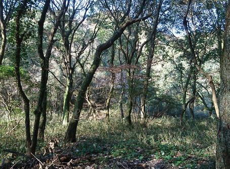 立田自然公園 古代の森