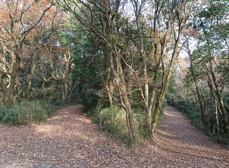 立田自然公園 落葉