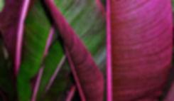 foglia rosa-verde.JPG
