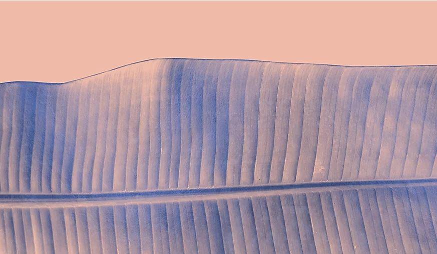 foglia rosa.JPG