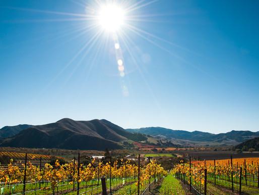 Pence Vineyards, Sta. Rita Hills